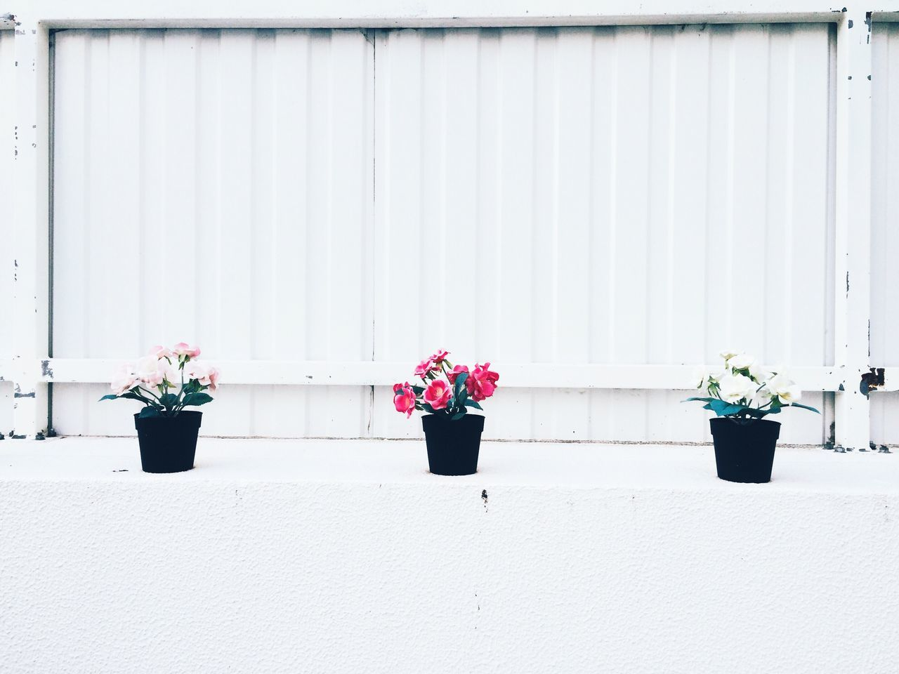 Potted Plants On Building Terrace