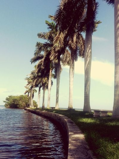 Nature On Your Doorstep Florida Deering Estate Life Is At Your Fingertips First Eyeem Photo