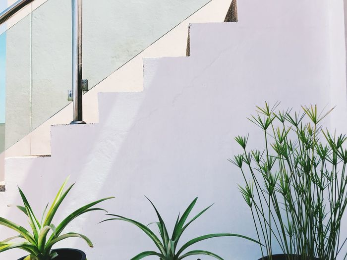 Plant Growth Architecture Day Nature Built Structure No People Wall - Building Feature Building Exterior Leaf Outdoors Staircase Plant Part Building Steps And Staircases White Color Green Color Sunlight Close-up Low Angle View Houseplant