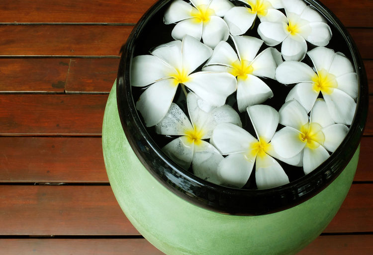 Flower Flowering Plant Freshness Wood - Material Indoors  Close-up Plant Food And Drink High Angle View Bowl Inflorescence Container No People Table Flower Head White Color Still Life Wellbeing Nature Tray Flower Pot Spa Aroma Aromatherapy Frangipani Frangipani Flower