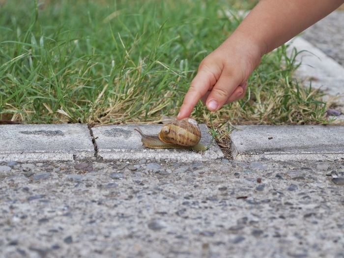 a toddler and a snail Snail Snailfriend Toddler  Small Hands Sense Of Touch Touching Human Hand Close-up