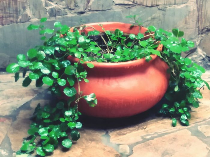 Green LifeGreen Nature