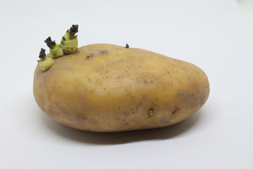potato Brown Bud Close-up Food Freshness Harvest Healthy Eating Nature Potato Vegetables White Background Whole