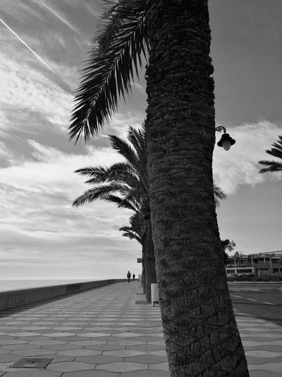 Paseo marítimo Aguadulce Almería Southernspain Sea Mediterranean  Sun Blackandwhite Sunlight Building Exterior Promenade Clouds And Sky Palm Tree Tree Outdoors Nature Day Sky One Animal Beauty In Nature Tree Trunk