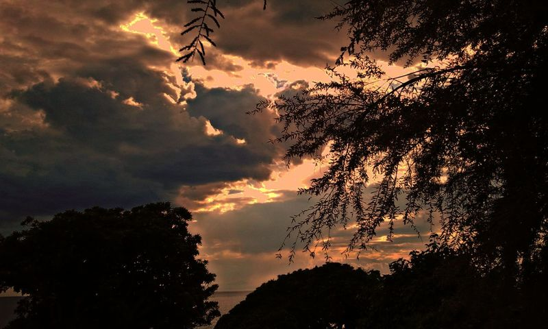 Silhoutte Tree And Sky Beautynature Edit Nature