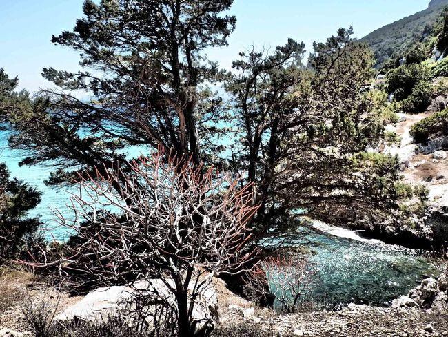 Seashore; Sardinia, Italy Nature Outdoors Wild Mediterranean  Clear Ocean Tranquility