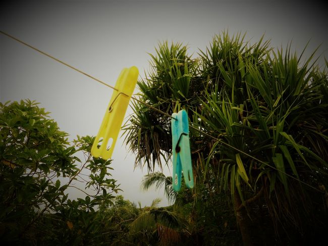 Laundry Beauty In Nature Close-up Day Grass Green Color Growth Laundry Line Leaf Nature No People Outdoors Plant Sky Tree Yellow