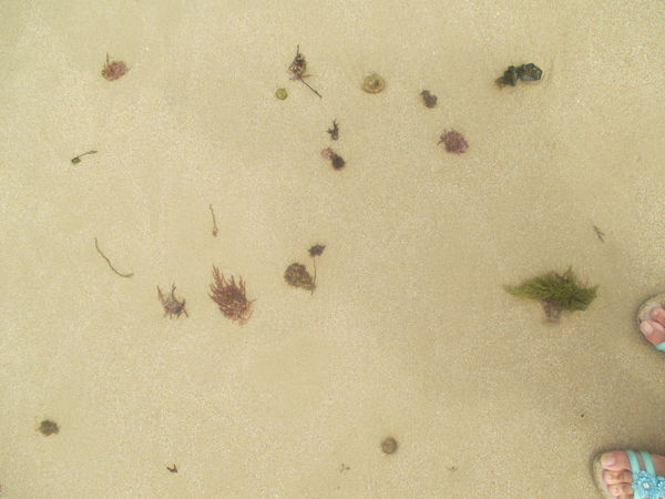 Algae Background Beach Beach Photography Beautiful Beach Beautiful Sand Beach Close-up Day Detail From The Beach Food Human Feet Human Toes Indoors  Nature No People Sand Sand Beach Sand Beach With Seaplants Sand Color Sand Color And Seaplants Sand Patterns Sandals Seaplants Summertime Texture