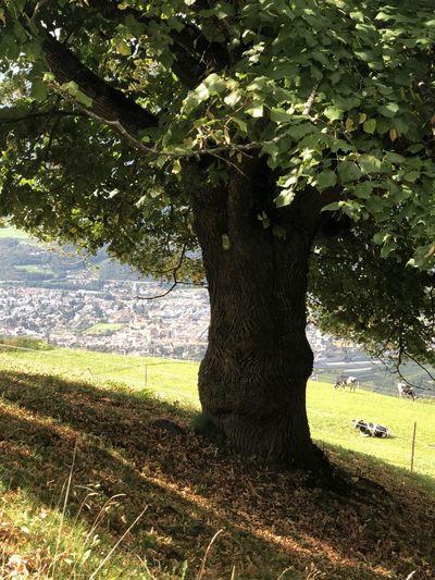Tree growing in field