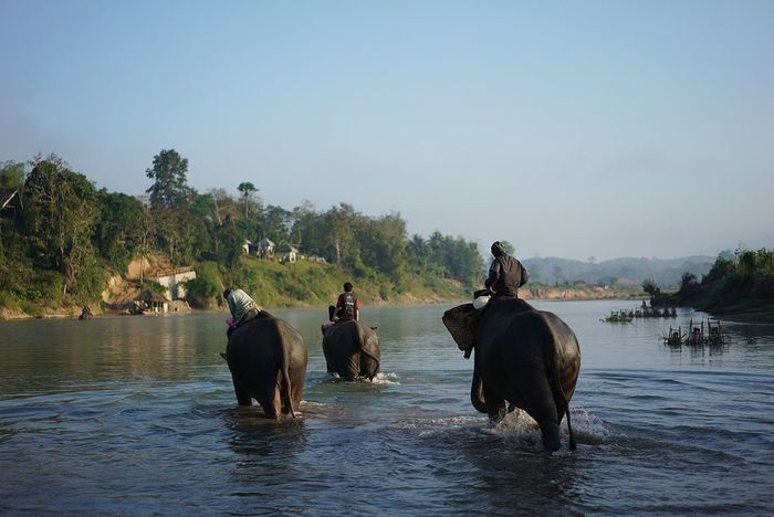 Beauty In Nature Day Elephant Jungle Laos Lifestyles Nature_collection Outdoors Real People River Sky Togetherness Water Wild Animal