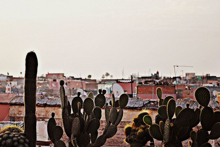 Antenna Cactus Morocco Pink Roof Roof Tops Sunrise
