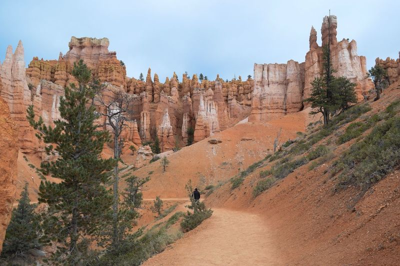 Hiking Trail in Bryce Canyon Tourist Attraction  Wilderness Utah Arid Bucket List Rock Awesome Erosion Hoodoos Amazing Scenery Amazing View Scenery Natural Wonder Path Trail Rock Formation Hiking Trail Hike Tree Nature Travel Destinations Sky Day Rock Formation Scenics - Nature