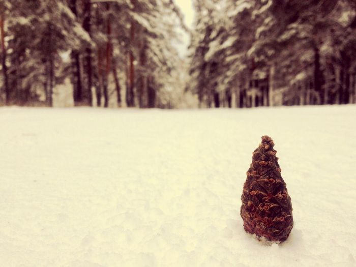 Frosen forest Forest Zerenda Snow Winter Zoom Fir-cone Landscapes With WhiteWall The Great Outdoors With Adobe