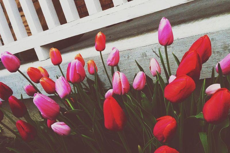 Bestfriend's Garden
