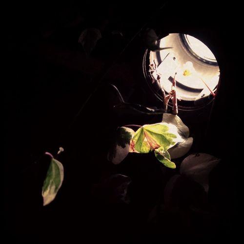 Blowlight