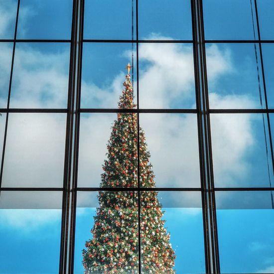 'tis Tree Christmas Tree Window