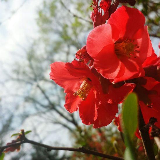 Dark Pink By Motorola Flowers Spring Repostsorry
