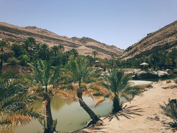 Oasis Natural