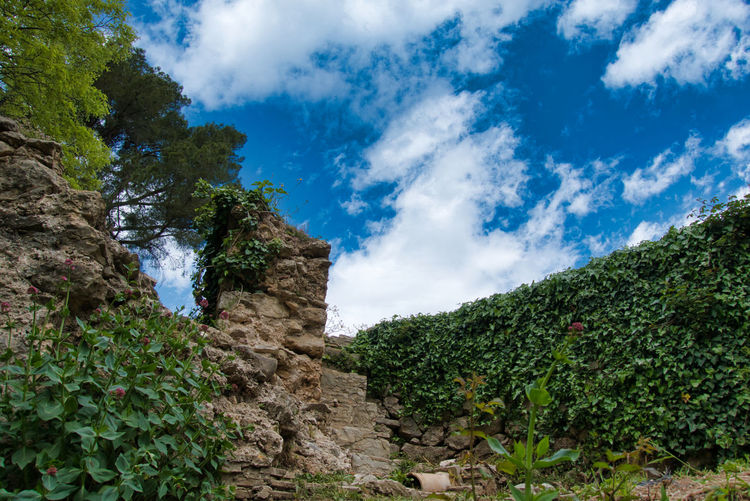 Cloud - Sky Sky Plant Nature Scenics - Nature Tree Beauty In Nature Tranquility No People Low Angle View Land Tranquil Scene Day Mountain Environment Rock Growth Non-urban Scene Landscape Green Color Outdoors Alzira La Habana
