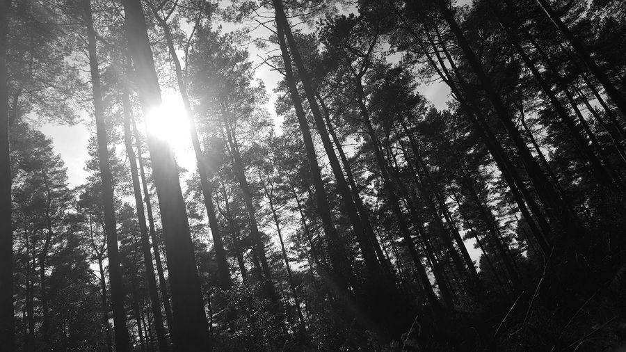 woods Tree Low