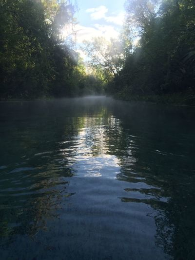 The flow Apopka River Beauty In Nature Natural Beauty Spring Water Summer Vibes Calming Mysterious Adventure