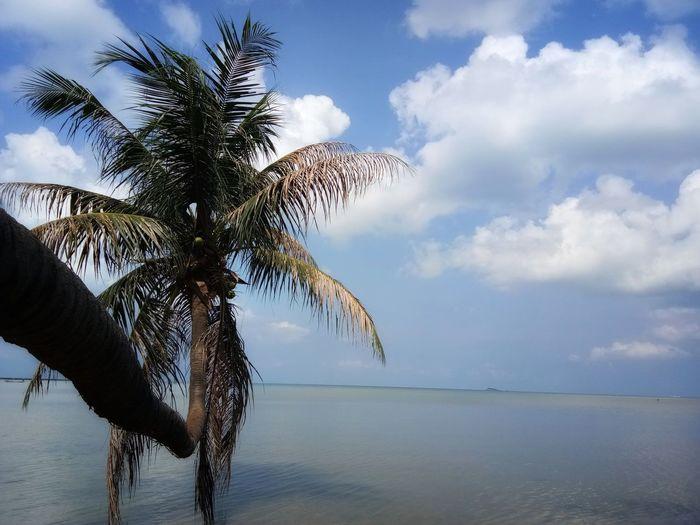 Tree Water Palm Tree Blue Sky Cloud - Sky Branch