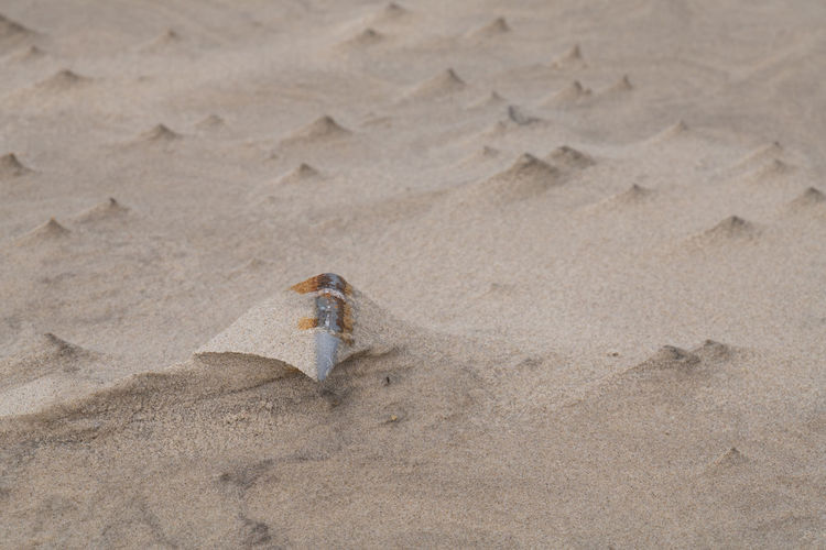 Rusted bullet in the sand