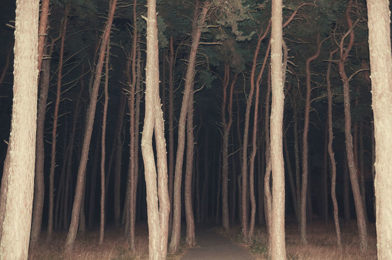 The Slender Man Alone Dark Darkness Forest Linas Was Here Lost Nature Night Road Scary Spooky Trees Woods The Great Outdoors - 2018 EyeEm Awards
