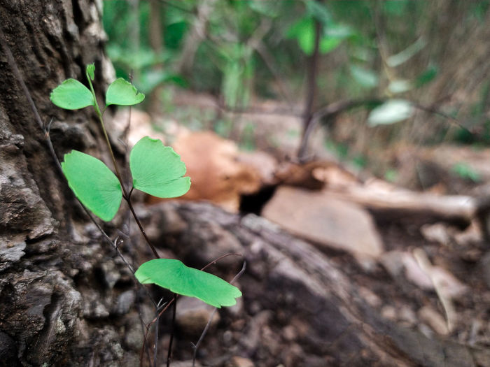 Close-up of leaves on tree trunk in forest