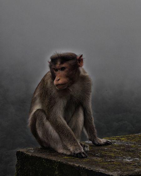 Monkey Wildlife Nature Photography Photography Photo Love It