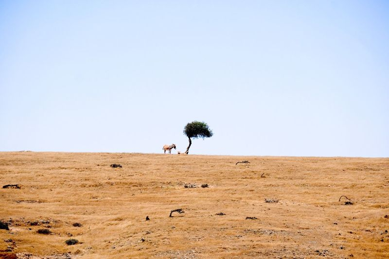 Donkey standing on field against sky