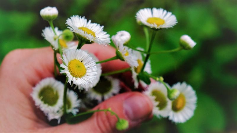 Aster Beauty In Nature Blooming Bouquet Bouquet Of Flowers Close-up Day Florist Flower Flower Head Fragility Freshness Growth Holding Human Body Part Human Hand Nature One Person Outdoors People Petal Plant Real People Live For The Story