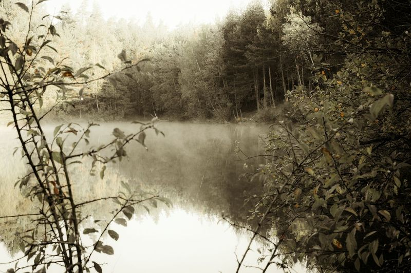 Nature Forest Photography Forest Trees Forestphotography Wald Waldsee See See What I See Seen On My Walk Foggy Morning Fog In The Trees Fog Over Water Water Wasser Nebel Nebelig Nebelwald Nebel Felder Hello World Relaxing Hanging Out Taking Photos Enjoying Life Black Grau