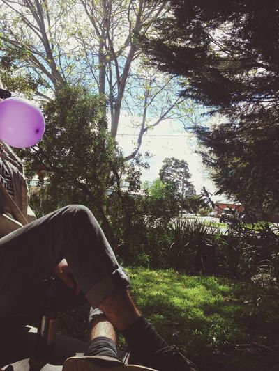 Sunny Days Ballons Trees Balloons Paradise Sun Sunny Day Morning First Eyeem Photo