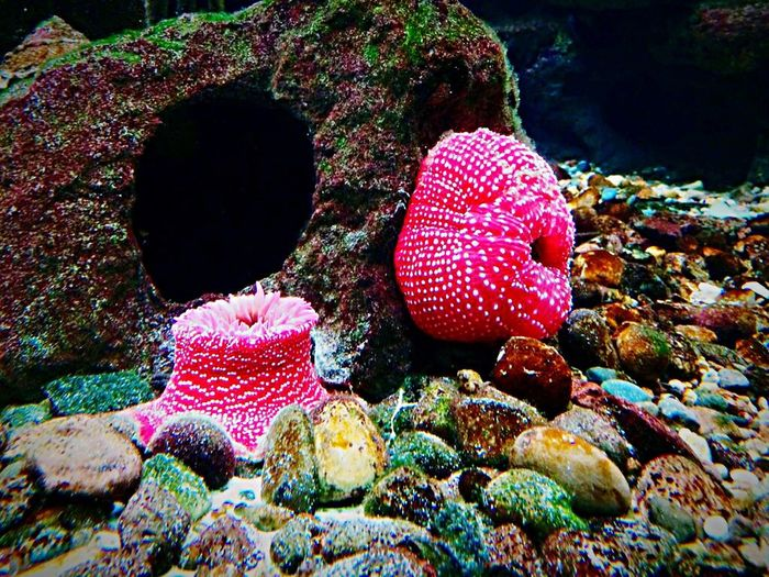 Coralreef Anemone Sheddaquarium Color Palette Life Aquatic Sealife Sea Life Bestoftheday Behind Glass Rock Awesome Beauty In Nature Beautiful Colour Of Life Life Colours