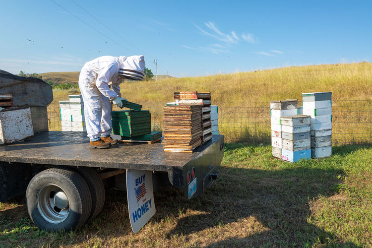 SHERIDAN, WY - AUGUST 25: Beekeeper preparing to harvest honey near Sheridan, WY on August 25, 2015 Agriculture Agriculture Apiarist Apiary Bee Beehive Beehives Beekeeper Beekeepers Beekeeping Bees Buffalo Colony Day Honey Job Manual Worker Outdoors Sheridan Spring Truck Work Working Wyoming