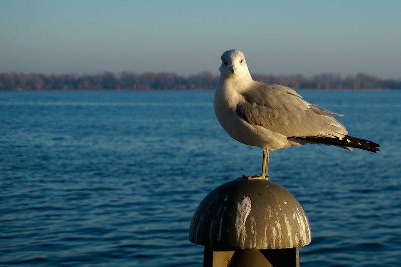 Toronto Lakeontario  Nature Birds Torontophotographer