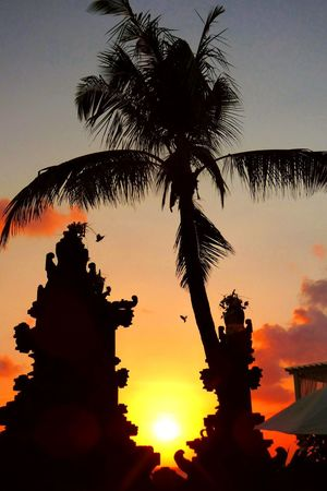 Vacations Holiday Tropical Paradise Tropical Tree Tropical Bali INDONESIA Dreamview Sunset_collection Sunset Silhouettes Sunset #sun #clouds #skylovers #sky #nature #beautifulinnature #naturalbeauty #photography #landscape Culture Baliphotography Bali Culture Beauty In Nature Beautiful Sunset Travelpics Awesome_shots Tree Palm Tree Sunset Silhouette Sky Coconut Palm Tree Tropical Tree Tropical Climate