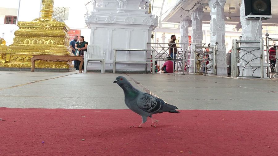 At Temple