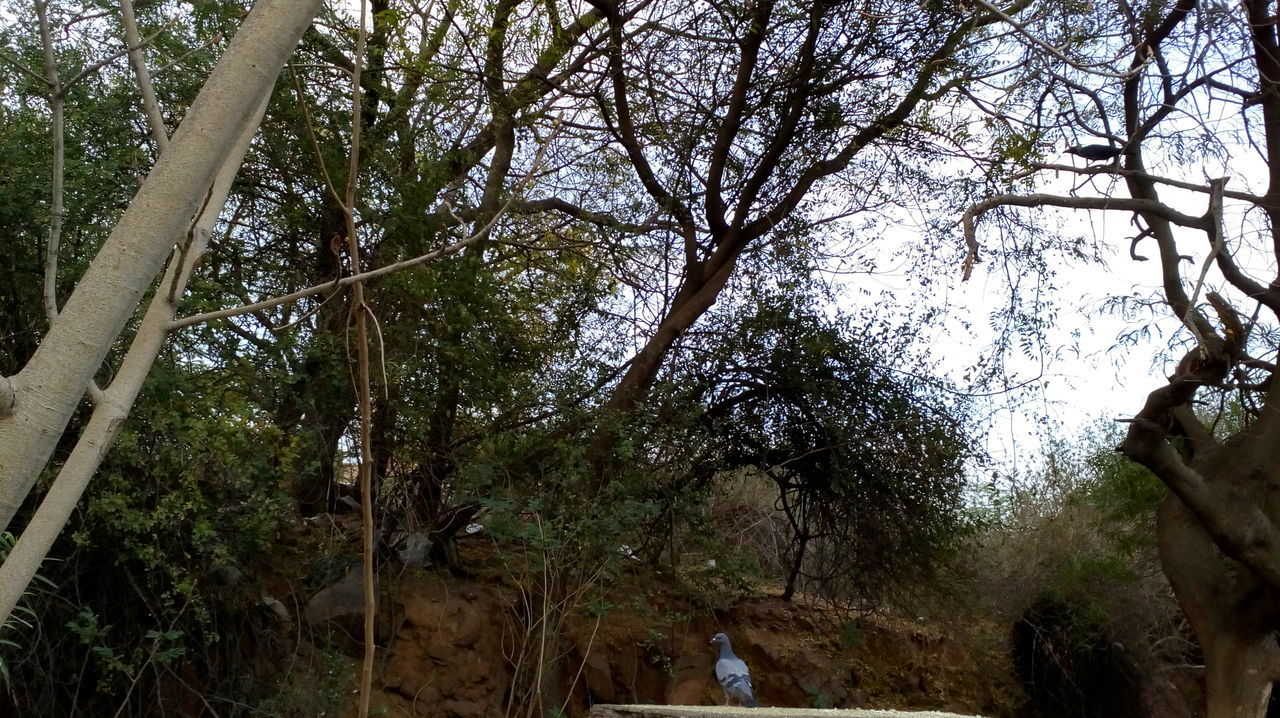 tree, nature, branch, day, outdoors, growth, tranquility, beauty in nature, forest, low angle view, scenics, no people, sky