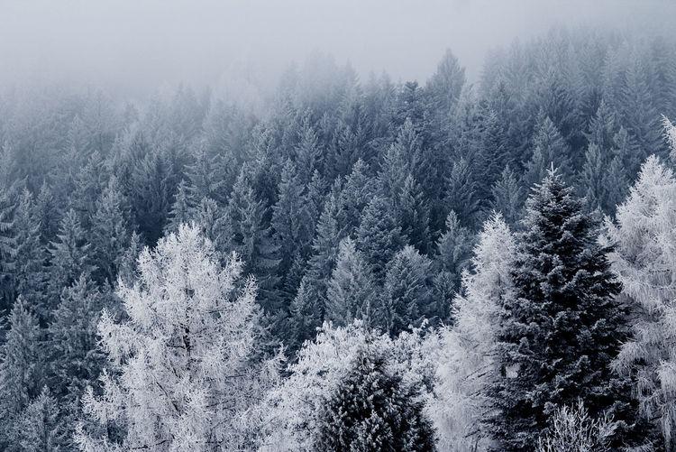 Ice Tree Winter