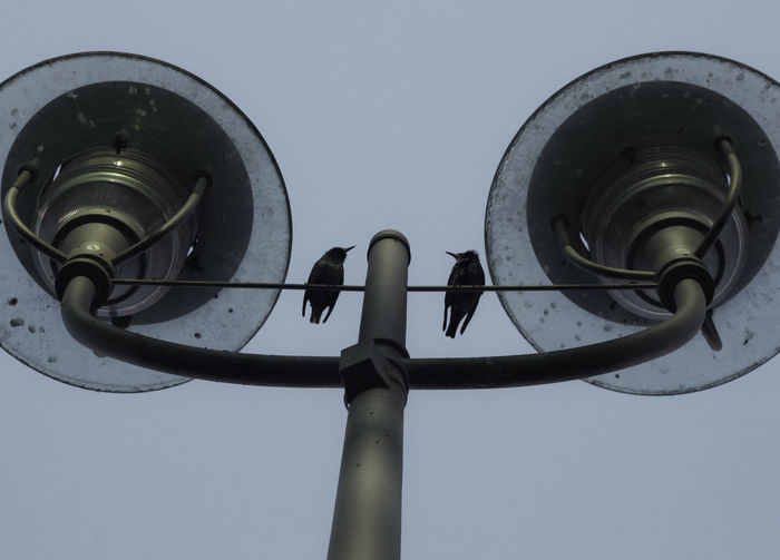 Lamp Post Birds Blue Clear Sky Close-up Connection Day Electricity  Lamps Lighting Equipment Low Angle View Megaphone Metal Nature No People Outdoors Pole Power Supply Security Camera Sky Street Street Light Surveillance Technology