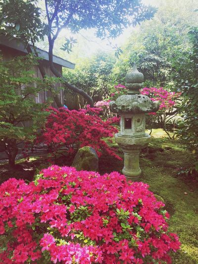 Japanese Garden Japanse Tuin  Plant Flower Flowering Plant Beauty In Nature Tree Garden