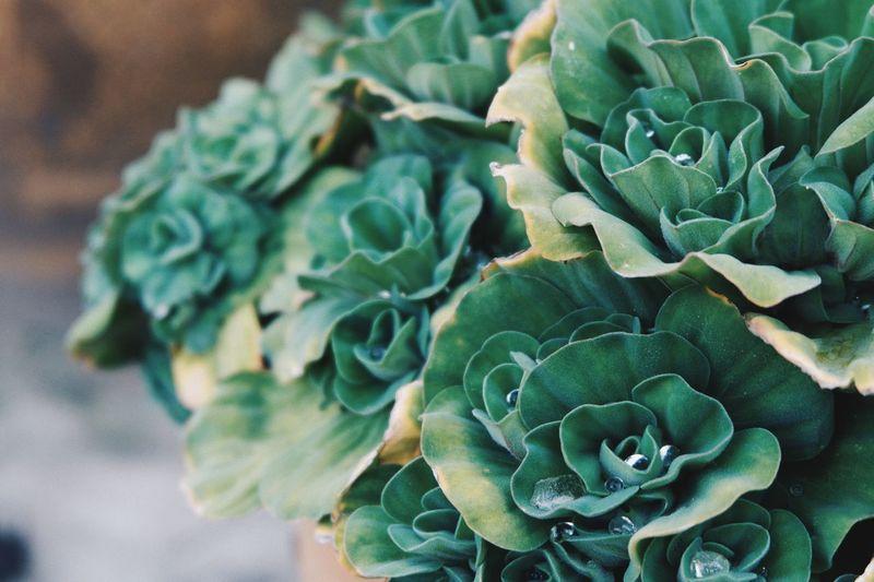 Close-up of cactus flower