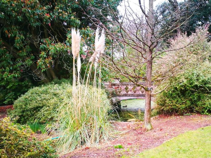 Public Park Tree Trunk Flower Bed Foliage Early Spring Duck Pond Quaint Bridge Pampus Grass Growth Nature Tree Day Outdoors No People Tranquility Beauty In Nature Plant Grass Water