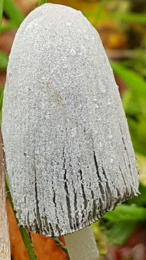 Mushrooms Mushroom Taking Photos Enjoying Life In The Forest Taking Photos