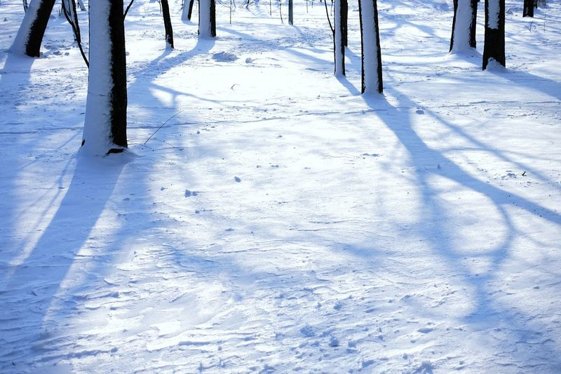 Winter Wintertime Snow Snowing Park Frozen Scenics - Nature Cold Temperature Covering Beauty In Nature Sunlight Sunlight And Shadow Landscape Bare Tree Blue Forest WoodLand Calm Calmness Tranquility Tranquil Scene Tree Trunk Deep Snow Snowfall Snow Covered Cold Snowcapped White Branch Weather Condition