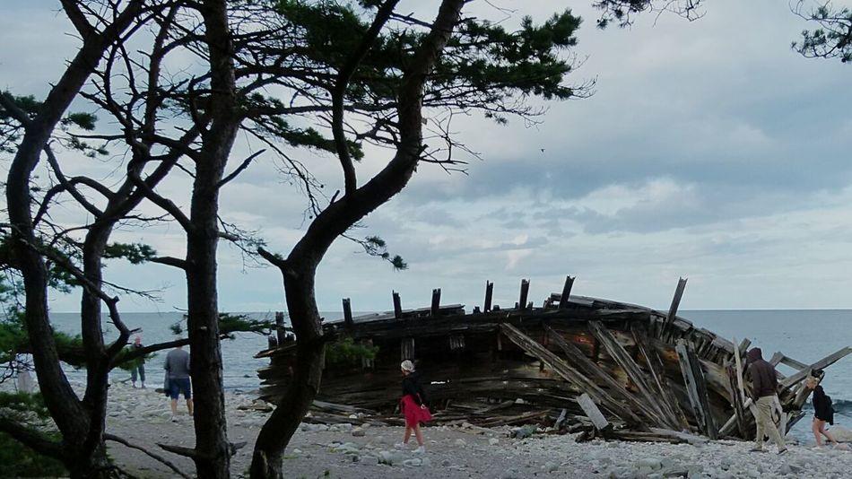 Swiks, ein 1926 vor der Nordspitze Ölands gesunkenes Schiff - wurde 1950 nach einem Wintersturm an den Strand gespült. Swiks was a schoonerthat sank off Öland, 1926.Öland Schweden Sweden Wrack Beach Sea Nature Wreck Sverige Scandinavia RalfsSchweden