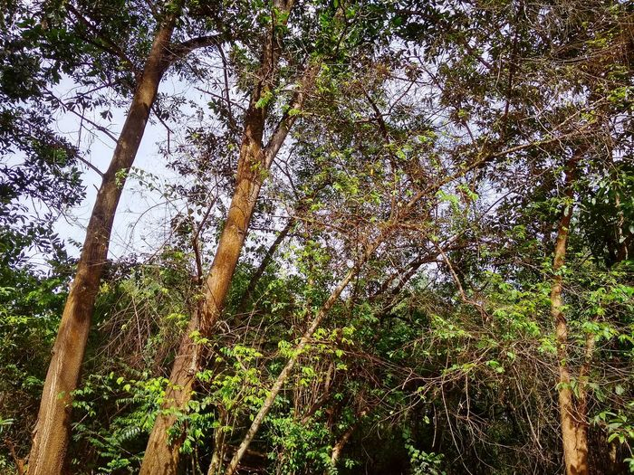 Jungle Malaysia Forest Jungle Tree Backgrounds Full Frame Sky Close-up Green Color Plant Tree Trunk WoodLand Forest Woods EyeEmNewHere