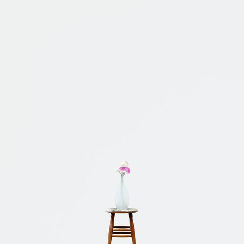 R O S E • Flowers Flower Collection Minimalism Minimalist EyeEm Best Shots - Minimalist Indonesia_photography Simple Beauty